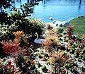 Swan in Flowers, Palm Springs 1989 (6218142958).jpg
