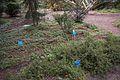 TU Delft Botanical Gardens 111.jpg