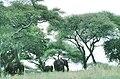 Tanzanie Meru 04.jpg