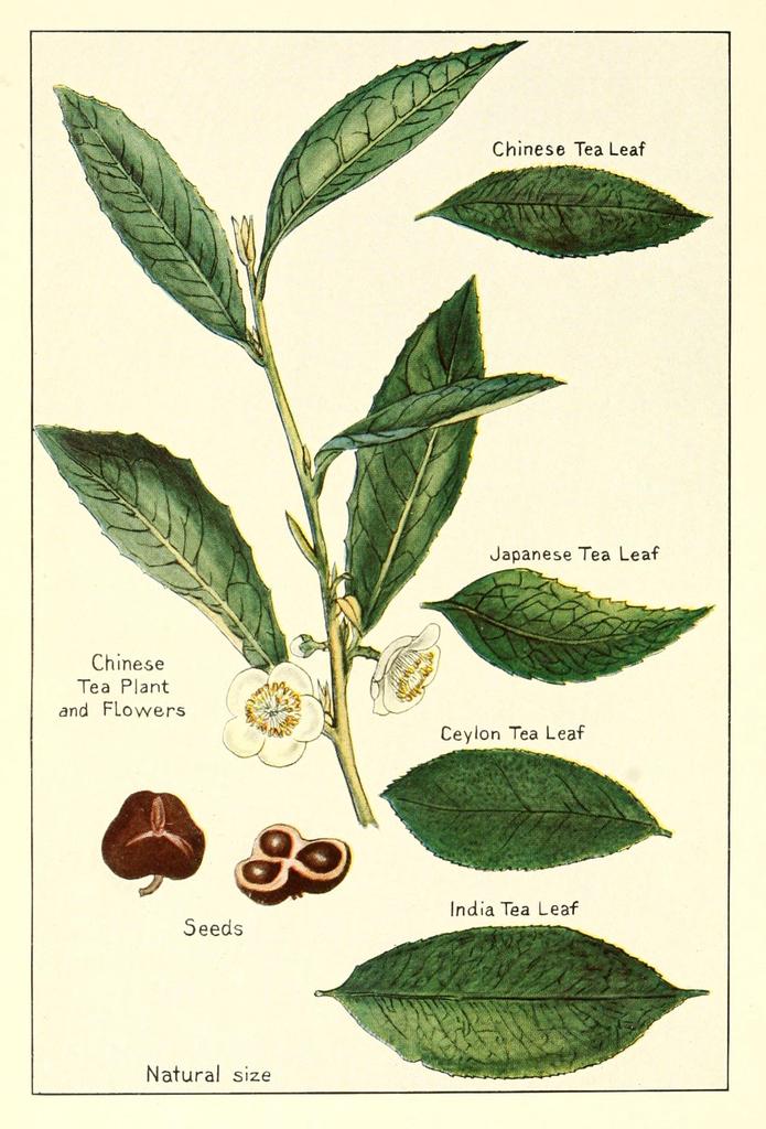 Nature S Tea Unicity Amazon