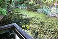 Teich Foehrenberge I.jpg