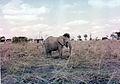 Tembo ! (3089087036).jpg