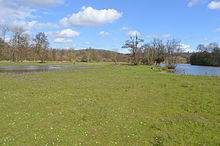 Temple Island Meadows 15.JPG
