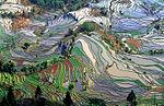 Terrace field yunnan china edit