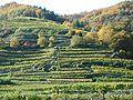 Terrassenweingaerten Wachau.jpg