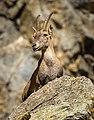 The Lady of the Rocks - Flickr - Fulvio Spada.jpg