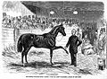 "The supposed incurable horse ""Cruiser""... circa 1859 Wellcome L0019354.jpg"
