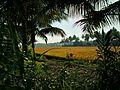 Theni, Tamil Nadu 625531, India - panoramio.jpg