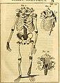 Theodori Kerckringii, Doctoris medici Opera omnia anatomica - continentia Specilegium anatomicum, Osteogeniam foetuum, nec non Anthropogeniae ichnographiam - accuratissimis figuris aeri incisis (14758641856).jpg