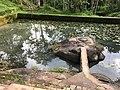 Thirunelly Maha Vishnu temple Kerala water tank on way to Papanasini.jpg