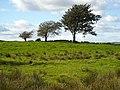 Three Trees Near Harelaw - geograph.org.uk - 995043.jpg