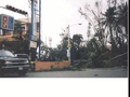 Toppled trees in Santo Domingo after Hurricane Georges.png