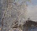 Torkilstöten december 2011.jpg