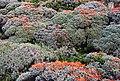 Torres del Paine - květena - panoramio.jpg