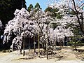 Tosakokubunzi07.jpg