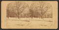 Touro Park in winter, by Joshua Appleby Williams 3.png