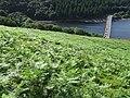 Towards Ladybower Reservoir - geograph.org.uk - 1396930.jpg