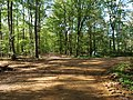 Track in the Hambach forest 06.jpg