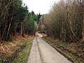 Track through Bedgebury Forest - geograph.org.uk - 1195979.jpg