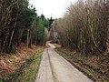 Track through Bedgebury Forest - geograph.org.uk - 1195979.jpg