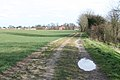 Track towards Rectory Farm - geograph.org.uk - 744731.jpg