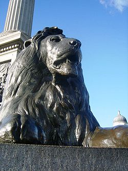 One of the four lions guarding Nelson's Column.