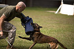 Training Unleashed, Marine dog handler shares bond with canine 131015-M-NP085-002.jpg