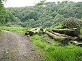Tree trunks beside Hobby Drive - geograph.org.uk - 1431667.jpg