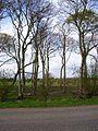 Trees beside the B7077 - geograph.org.uk - 163827.jpg