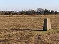 Triangulation pillar on Bratley Plain, New Forest - geograph.org.uk - 330760.jpg