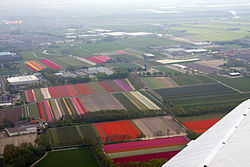 Tulip fields Lisse (13983881641).jpg