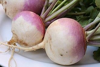 Turnip - turnip roots