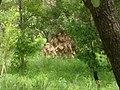 UNESCO Niokolo-Koba National Park Senegal (3686557465).jpg