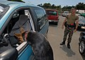 US Navy 070329-N-4965F-004 Military working dog, Arpi, a 5-year-old German Shepherd, locates hidden explosives inside of a car during a training.jpg