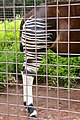 Ueno zoo, Tokyo, Japan (5896489482).jpg