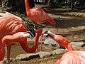 Ueno zoo, Tokyo, Japan (7552453).jpg