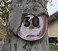 Un panneau 30 intégré à un arbre sur le campus de La Doua.JPG