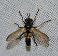 Unidentified insect (14558300906).jpg