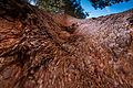 United States - California - Sequoia National Park - 06.jpg