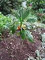 Unknown plant - Madeira - DSC07989.JPG