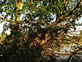 Unnamed2 - panoramio (91).jpg