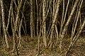 Unterhölzer Wald-3413.jpg