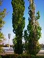 Untitled1 - panoramio (7).jpg