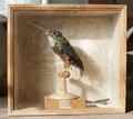 Uppstoppad fågel, Jakamar, Galbula viridis från 1800-1820 - Skoklosters slott - 95028.tif