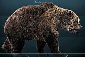 Najlepšie medveď datovania App