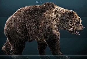 Cave bear - Life restoration.
