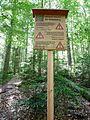 Urwaldsteig im Nationalpark Bayerischer Wald.jpg