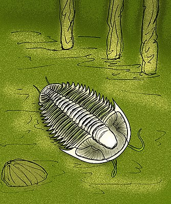 Utaspis marjumensis.jpg