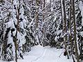 Varjakansaari Woods Oulunsalo 20080221.JPG