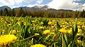 Verde primavera , giallo sole (i miei colori preferiti) - panoramio.jpg